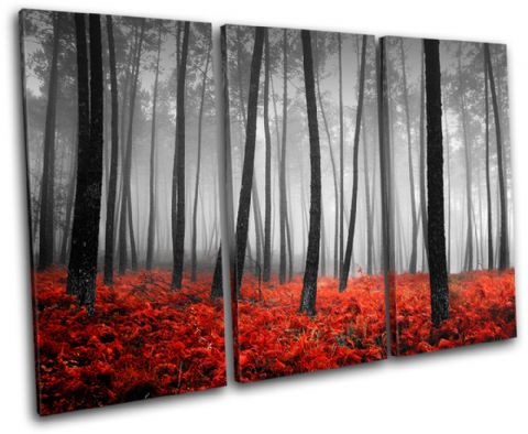 Stunning Forest Landscapes - 13-0775(00B)-TR32-LO